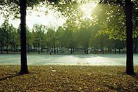 Foglie sul prato. Leaves on the lawn.....