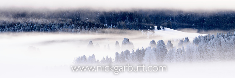 Early morning mists on a winter morning. Hayden Valley. Yellowstone National Park, Wyoming, USA. January