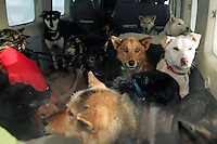 "Wednesday March 7, 2007   A "" Cessna Caravan"" planeload of dropped dogs waits to leave the Nikolai checkpoint on Wednesday on their way back to Anchorage."