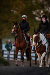 November 2, 2020: Nazuna, trained by trainer Roger Varian, exercises in preparation for the Breeders' Cup Juvenile Fillies Turf at Keeneland Racetrack in Lexington, Kentucky on November 2, 2020. Alex Evers/Eclipse Sportswire/Breeders Cup