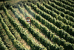 English vineyards North Wootton Somerset 1980s Major Gillispie spraying his vineyard 1989 UK