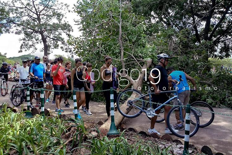 SÃO PAULO, SP, 10.03.2019: ARVORE-SP - Frequentadores do Parque do Povo na zona sul de São Paulo, tiveram dificuldade para acessar o local na manhã deste domingo (10), após a queda de uma árvore.  (Foto: Luiz Claudio Barbosa/Código19)