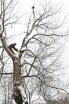 Tree removal worker cutting large section of tree.