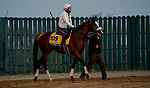 October 31, 2020: Tiz The Law, trained by trainer Barclay Tagg, exercises in preparation for the Breeders' Cup Classic at Keeneland Racetrack in Lexington, Kentucky on October 31, 2020. Scott Serio/Eclipse Sportswire/Breeders Cup/CSM