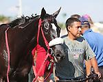 HALLANDALE BEACH, FL - JANUARY 21:  #3 Mia Torri (FL) leaves the winners' circle after winning  the Sunshine Millions Distaff at Gulfstream Park on January 21, 2017 in Hallandale Beach, Florida. (Photo by Liz Lamont/Eclipse Sportswire/Getty Images)