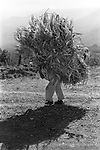 Mexico Indigenous Indian man carrying huge bundle on his back. Pan American Highway farmer carries huge bundle on his back.
