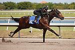 #41Fasig-Tipton Florida Sale,Under Tack Show. Palm Meadows Florida 03-23-2012 Arron Haggart/Eclipse Sportswire.