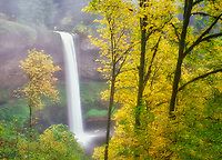 South Falls with fall colored Big Leaf Maple trees. Silver Creek Falls State Park. Oregon.