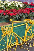 Yellow bike with poinsetias. Al's Nursery. Woodburn. Oregon