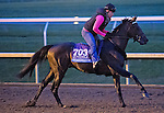 October 26, 2015 :  Exaggerator, trained by J. Keith Desormeaux and owned by Big Chief Racing LLC, exercises in preparation for the Sentient Jet Breeders' Cup Juvenile at Keeneland Race Track in Lexington, Kentucky on October 26, 2015. Scott Serio/ESW/CSM