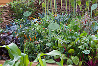 "Small vegetable garden with signs that say ""My Little Garden"" and ""Sunflowers and marigolds"" and ""Winter Vegetables Red Cabbage"" intermixed with chard, orange peppers, red lettuce, corn, kale, cute, pole beans, wicker fence, climbing, signet marigolds Tagetes flowers, wide variety in vegetable garden, closely planted crops aka Cavalo Nero kale"