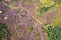 Lüneburger Heide: EUROPA, DEUTSCHLAND, NIEDERSACHSEN, 5.09.2021: Die Lüneburger Heide ist eine grosse, überwiegend flachwellige Heide-, Geest- und Waldlandschaft im Nordosten Niedersachsens in den Einzugsgebieten der Staedte Hamburg, Bremen und Hannover. Sie ist benannt nach der Stadt Lueneburg und umfasst den Hauptteil des frueheren Fuerstentums Lueneburg. Besonders in den zentralen Teilen sind weitraeumige Heideflaechen erhalten. Die Heiden sind seit dem Neolithikum durch Ueberweidung der ehemals weit verbreiteten Waelder auf unfruchtbaren Sandoeden im Bereich der Geest entstanden. Die noch vorhandenen Reste dieser historischen Kulturlandschaft werden vor allem durch die Beweidung mit Heidschnucken offengehalten. Aufgrund der einzigartigen Landschaft ist die Lueneburger Heide ein bedeutender Tourismusschwerpunkt in Norddeutschland, der teilweise in Naturparks integrativ entwickelt wird.<br />Das Muster auf dem Foto entsteht durch das plaggen der Heide. Hier wird die Heide am Boden geschnitten und die Humusschicht abgetragen.