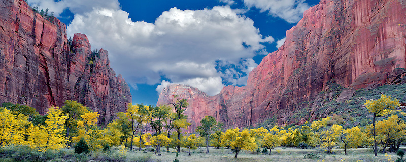 Fall colored trees. Zion National Park, Utah.