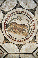 Picture of a Roman mosaics design depicting  a panther charmed by  music being played by Orpheus, from the ancient Roman city of Thysdrus, Bir Zid area. 2nd century AD. El Djem Archaeological Museum, El Djem, Tunisia.