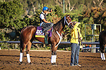 October 28, 2014: Unbridled Forever exercises in preparation for the Breeders' Cup Distaff at Santa Anita Park in Arcadia, California on October 28, 2014. Zoe Metz/ESW/CSM