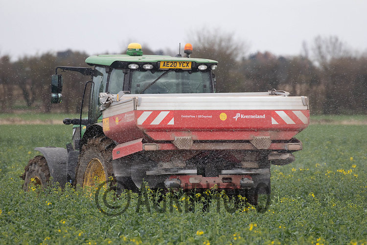 16th March applying nitrogen to oilseed rape.<br /> ©Tim Scrivener Photographer 07850 303986<br />      ....Covering Agriculture In The UK....