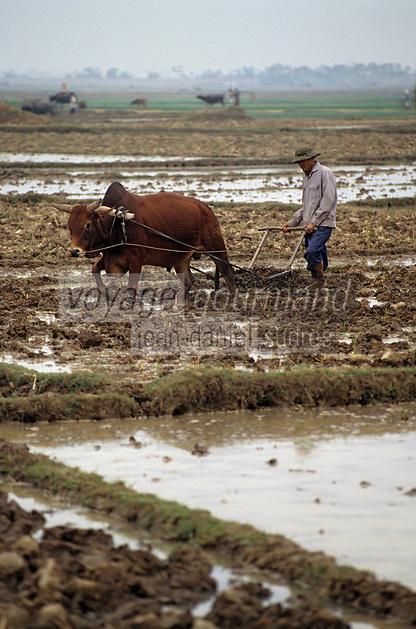 Asie/Vietnam/Mao Khe: labours dans les rizières avec un bufle