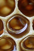 A wax cell filled with honey.