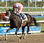 20 March 2010: Together Indy after the Appleton Stakes at Gulfstream Park in Hallandale Beach, FL.