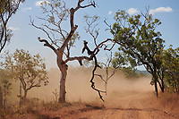 Dust obscures the Gibb River Road, as Nick and Joanna Atkins' road train makes its way from Kununurra to Kalumburu.