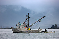 Commercial Seine fishing vessel Kodiak Sockeye in College Fjord, Prince William Sound, southcentral, Alaska.