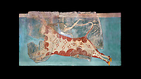 Mycenaean Fresco wall painting of a Mycanaean acrobat leaping over a bull, Early Palace,  Tiryns, Greece.  Athens Archaeological Museum. Black Background<br /> <br /> 14th  Cent BC.. Cat No 1595. The Mycenaean Fresco depicts an acrobat leaping over a charging bull whilst holding onto its horns. This ritual symbolised the struggle of domination of man over wild nature.