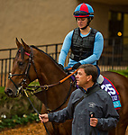 DEL MAR, CA - OCTOBER 31: Untamed Domain, owned by West Point Thoroughbreds, Inc. and trained by H. Graham Motion, exercises in preparation for Breeders' Cup Juvenile Turf at Del Mar Thoroughbred Club on October 31, 2017 in Del Mar, California. (Photo by Anna Purdy/Eclipse Sportswire/Breeders Cup)