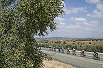 The peloton during Stage 11 of La Vuelta d'Espana 2021, running 133.6km from Antequera to Valdepeñas de Jaén, Spain. 25th August 2021.     <br /> Picture: Unipublic/Charly Lopez | Cyclefile<br /> <br /> All photos usage must carry mandatory copyright credit (© Cyclefile | Charly Lopez/Unipublic)