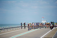 Frederik Willems (BEL/Lotto-Belisol) paced the peloton for a big part of the way<br /> <br /> 3rd World Ports Classic 2014<br /> stage 1: Rotterdam - Antwerpen 195km