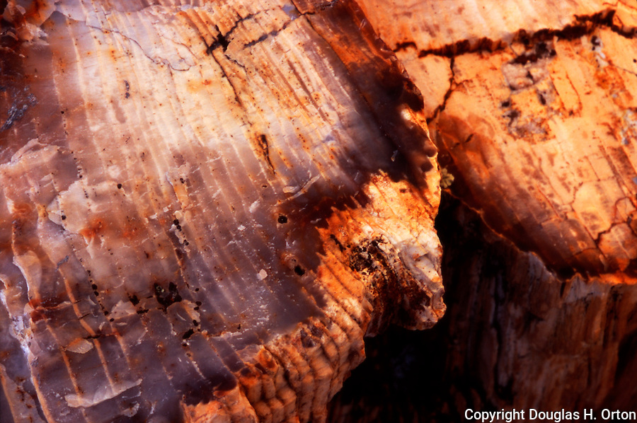 Close up image of petrified wood at Ginko Petrified Forest/Wanapum Recreational Area in Ginko Petrified Forest State Park, Washington, near Vantage, on the Columbia River.