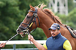 September 19, 2014: Pennsylvania Derby contender Tapiture schools in the paddock the day before the race at Parx Racing in Bensalem, PA  ©Joan Fairman Kanes/ESW/CSM