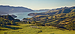 Farmer with Sheep on Banks Peninsula with Akaroa Harbour in background. Canterbury Region New Zealand.