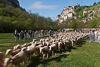 Europe/Europe/France/Midi-Pyrénées/46/Lot/ Rocamadour:  Départ de la transhumance dans le canyon de l'Alzou - Transhumance en Quercy
