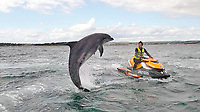 This is the moment a friendly dolphin leaps clear out of the water to greet a jet-ski rider