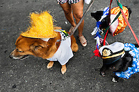 Dogs, wearing fancy costumes, participate in the Blocao pet carnival show at Copacabana beach in Rio de Janeiro, Brazil, 12 February 2012.