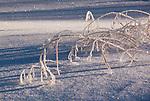 Winter in the Bear Wallow Wilderness area, before The Wallow Fire in Arizona.