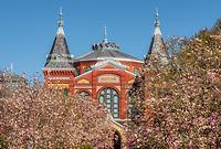 Smithsonian Washington DC National Mall Magnolia Blossoms
