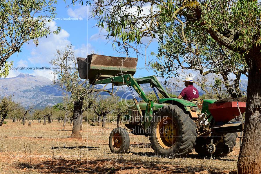 SPAIN Mallorca, Binissalem, Finca Biniagual, almond trees, John Deere tractor with almond trashing machine / SPANIEN Mallorca, Binissalem, Finca Biniagual, Mandelbaeume, John Deere Traktor mit Maschine zur Reinigung der Mandeln