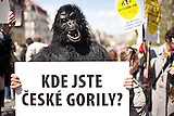 Proteste in Prag / Demonstration in Prague