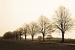 Aldworth Trees