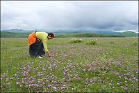 Flower-picking