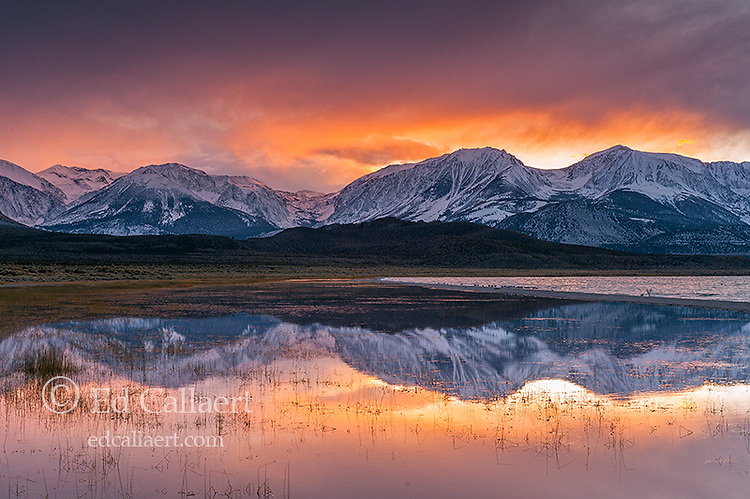 Sunset, Wetlands, Eastern Sierra, Mono Basin National Forest Scenic Area, Inyo National Forest, California