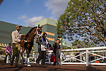 SEP 27,2014:Conquest Eclipse appears at the padock in Chandelier  Stakes at Santa Anita Park in Arcadia,CA. Kazushi Ishida/ESW/CSM