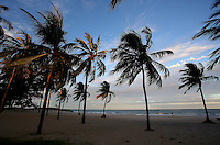 A general view of palm trees on Boa Viagem beach in Recife, Brazil, one of the 12 host cities of the 2014 FIFA World Cup