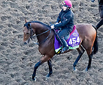 October 31, 2019: Breeders' Cup Mile entrant Circus Maximus, trained by Aidan P. O'Brien, exercises in preparation for the Breeders' Cup World Championships at Santa Anita Park in Arcadia, California on October 31, 2019. John Voorhees/Eclipse Sportswire/Breeders' Cup/CSM