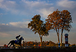 October 31, 2020: Scenes from the workouts leading up to the  Breeders' Cup at Keeneland Racetrack in Lexington, Kentucky on October 31, 2020. Alex Evers/Eclipse Sportswire/Breeders Cup