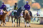 November 7, 2020 : Knicks Go, ridden by Joel Rosario, gets ready for the Big Ass Fans Dirt Mile on Breeders' Cup Championship Saturday at Keeneland Race Course in Lexington, Kentucky on November 7, 2020. Wendy Wooley/Breeders' Cup/Eclipse Sportswire/CSM