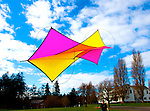 """Dan Schwenk, from Bothell, works to get his single bridle kite (a bridle refers to how many attachment points a kite has) airborne on the green at Fort Worden State Park on Saturday. Schwenk is participating in the 25th Annual Fort Worden Kite Makers Conference. This kite, which he titled """"Coming and Going"""" was made by his wife on Friday. The conference attracts about 150 participants and instructors from the United States, Canada, England and Germany."""