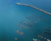 aerial photograph of aquaculture in Kochi, Shikoku, Japan