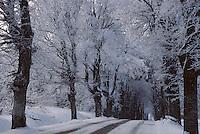Europe/France/Limousin/23/Creuse/Plateau de Millevaches/Env Féniers: Hiver